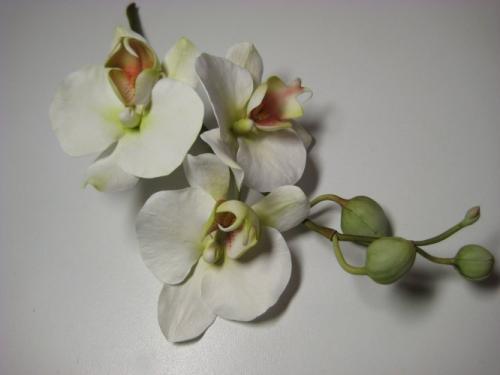 orchidee-bianche paola-avesani-01