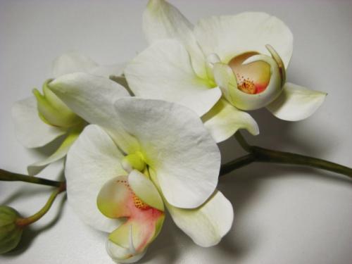 orchidee-bianche paola-avesani-02