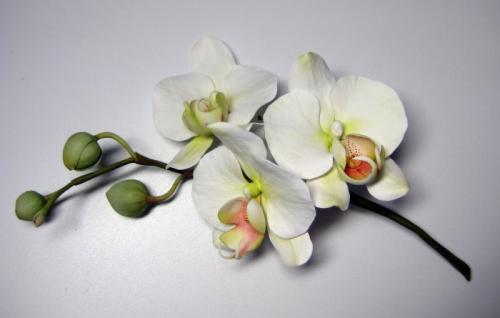 orchidee-bianche paola-avesani-03