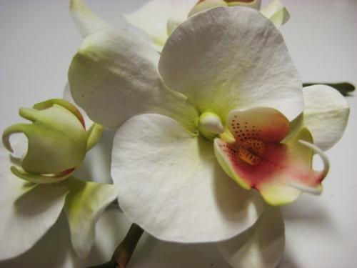 orchidee-bianche paola-avesani-04