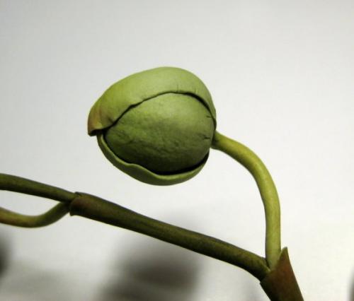 orchidee-bianche paola-avesani-05