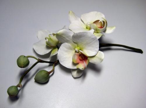 orchidee-bianche paola-avesani-06